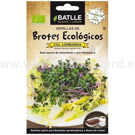 Semilla Col Lombarda Brotes Ecologicos