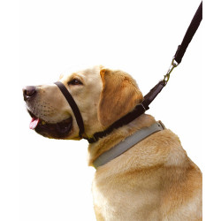 COLLAR ANTI TIRONES CANNY DOG