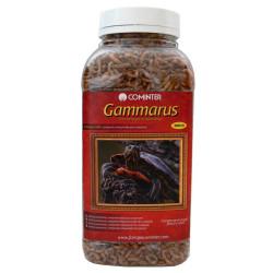 Alimento Gammarus Tortugas Acuáticas